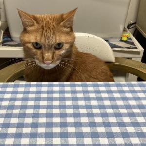 43日目:ネコちゃんとの食卓