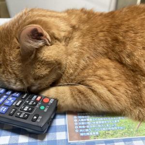 44日目:ネコちゃんと居眠りしたい