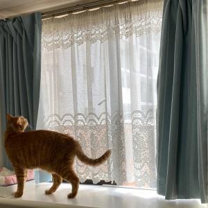 46日目:出窓にネコがいる生活