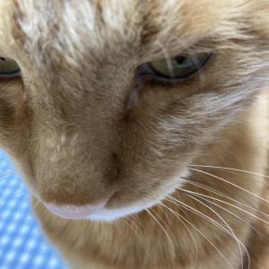 70日目:ネコちゃんにメンチきられました