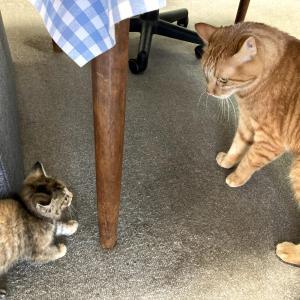 79日目:ネコちゃん♀をお迎えしました^^