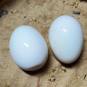 今夜のぬか漬けと。初の「ゆで卵のぬか漬け」