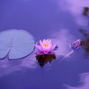 現実はコントロールできない理由が腑に落ちる。現実は心の投影。