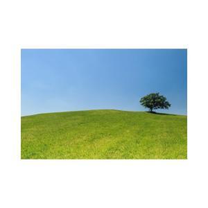 『草原の椅子』宮本輝~親友がいること、それが人生の最高の出来事なのかもしれない