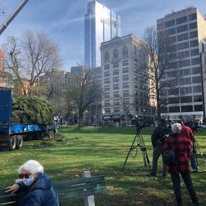 Boston common のクリスマスツリー設置に遭遇
