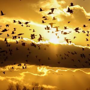 夕焼けと野鳥たち。