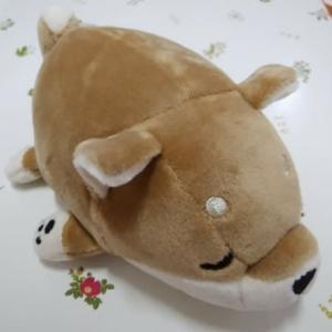 手のひらサイズの柴犬コタロウ 20210709