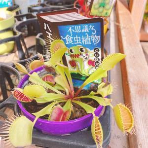 【考える力・プラス講座】国語に出てきた食虫植物を育てることにしました