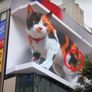 新宿の街 巨大猫の3D広告が面白い
