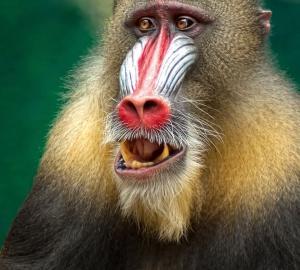 ところで動物学ってどんなこと勉強するの?~タスマニア大学での生活~(第一話)