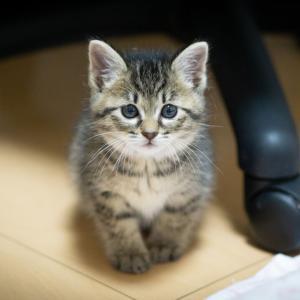 【ホント俺ってダメ猫。】感動する猫のコピペで打線組んだww【ずうずうしい野良猫】