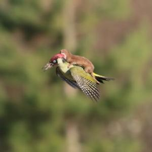 【画像】なぜ動物が別の動物に乗るのか