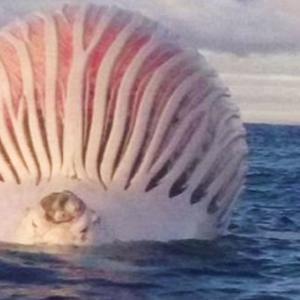 【画像】クジラの腹、キモすぎる