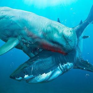 太古の巨大ザメ『メガロドン』凄く怖い