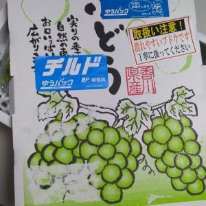 香川県 東かがわ市 シャインマスカット1.5kg:ふるさと納税2020