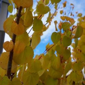 小さな秋を見つけに・・・