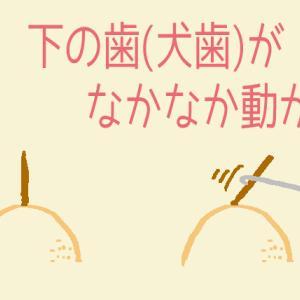 【調整4回目】ゴム掛けは、砂場の棒を動かすことと同じ?