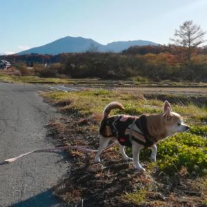 嬬恋村秋景色求めて散策【浅間山と鎌原の田園風景】