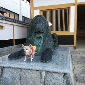 松阪歩き・・・三越のライオンさんと!