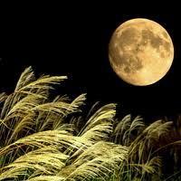 今夜の月見て思うこと〜わたしのことをほんの少しだけ〜