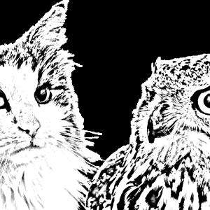 猫とミミズク(フクロウ)が同じ部屋で暮らす為に重要な3つのポイント