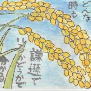 稲穂の絵手紙・5作品