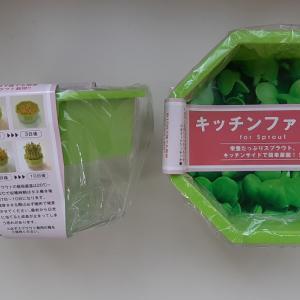 水耕栽培ブロッコリースプラウトの巻