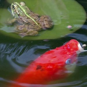 熱帯魚の餌の与え過ぎは病気の発生リスクを上げる