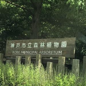【神戸森林植物園】水生生物と昆虫の観察をするお勧めポイントを紹介