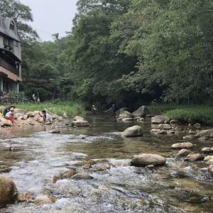 甲山森林公園の仁川で川魚を捕まえよう!