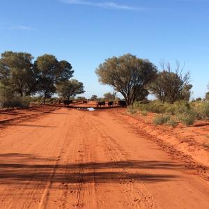 [オーストラリア時代]旅の途中、ある田舎町で車に追っかけられた事件。キャサリン、ダーウィンにて。