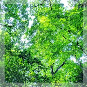 野鳥に会える森へ行きたい