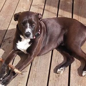 ジェイクの犬種2