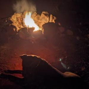 キャンプ犬
