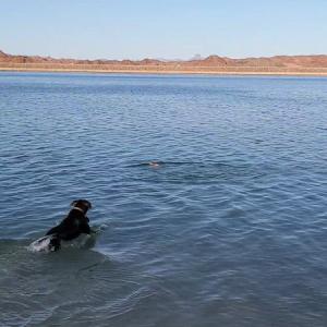 泳ぎ上達したよ!