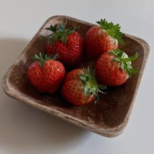 ハチ活 キンリョウヘン と 朝摘みイチゴ