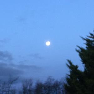 朝からお月見