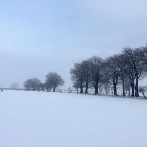 まだまだ続く雪景色