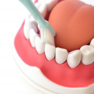 〈Q&A〉歯磨き 磨き残しが多い場所 歯周病に注意