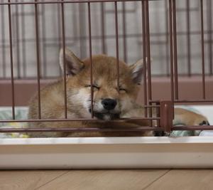 犬の寝顔はかわいい