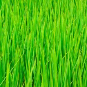 植物は現金だ。今年4回目のスライドモアの草刈り