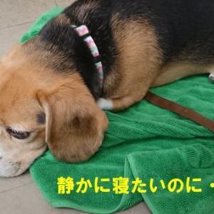のんちゃんもガンバレ~!