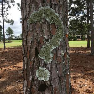 疑問を訴える木