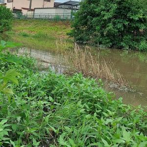 倉松川増水時限定ポイント  ヘラ3 マブ?