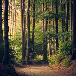 iTrustティンバー【木と環境と未来へ】【テーマ型アクティブファンド】