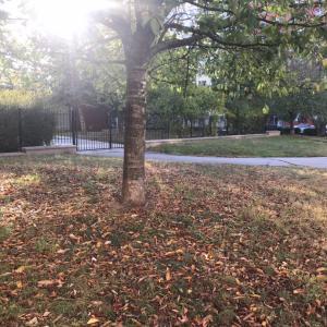 今朝のプラハは秋模様、近所のスーパーBILLAへGo!