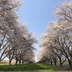 iCloudの写真整理をしながら2020年の桜を振り返ってみた