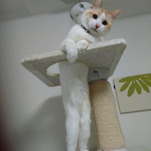 猫と諺(ことわざ)三昧!