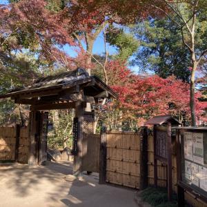 平林寺の紅葉の現在の状況を写真付きで!見頃はいつなのか?