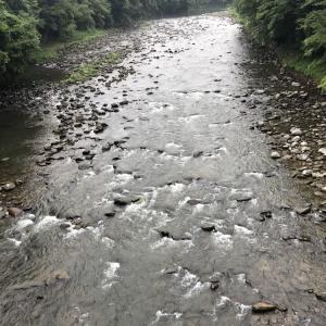 河川情報…ささ濁り